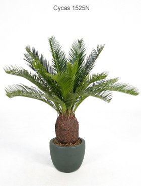 Растения форум комнатные растения в